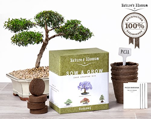 Natures\'s Blossom Sow and Grow 4 Bonsai Trees Germination