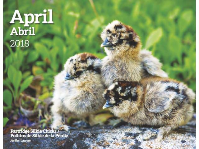 Get A Free Healthy Birds Calendar!
